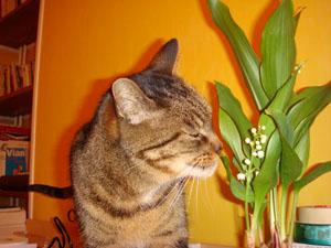 Tigs and Lilies