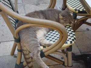 Corsica Cat