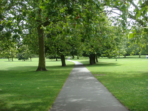 Tree Line(d)