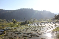 Fields Below