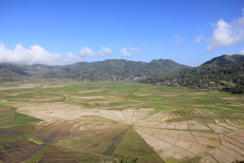 High Above the Rice