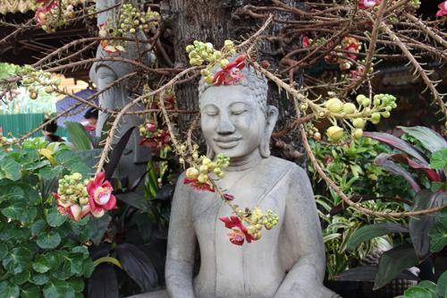 Buddah Beneathe