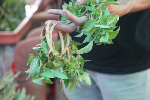 Charming Herb Rings