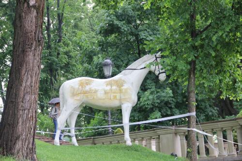 Classy Horse