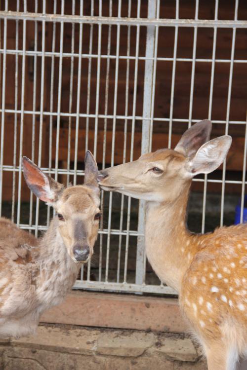 Deer Aw
