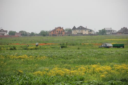 Field outside Kyiv