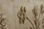 Taj Flowers