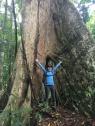 Massive trees