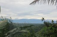Sumatran view
