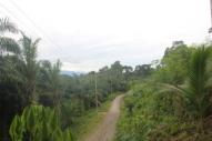 Jungle road
